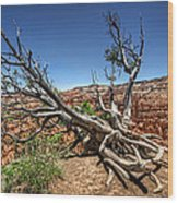 Uprooted - Bryce Canyon Wood Print