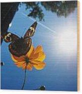 Upside Down Butterfly Wood Print
