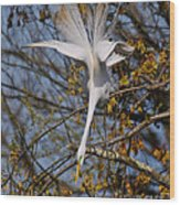 Upside Down Egret Wood Print