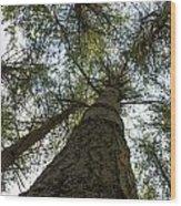Upward Perspective Wood Print