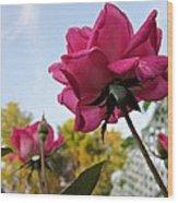 Upward Roses Wood Print
