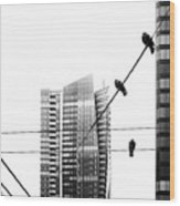 Urban Pigeons On Wires Wood Print