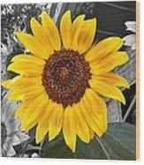 Urban Sunflower Wood Print