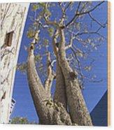 Urban Trees No 1 Wood Print