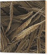 Urticating Hairs Of A Tarantula Wood Print by Science Photo Library