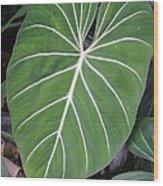 Us Botanic Garden - 121212 Wood Print