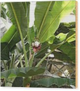 Us Botanic Garden - 12122 Wood Print