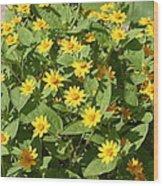 Us Botanic Garden - 121220 Wood Print