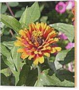 Us Botanic Garden - 121221 Wood Print