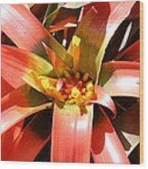 Us Botanic Garden - 12124 Wood Print