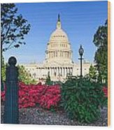 Us Capitol And Red Azaleas Wood Print