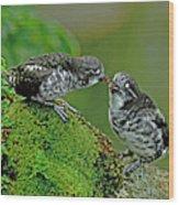 Usa, Alaska, Pribilof Islands, St Wood Print