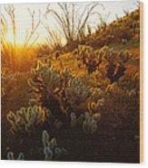 Usa, Arizona, Sonoran Desert, Ocotillo Wood Print