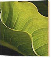 Usa, California, Big Sur, Calla Lily Wood Print