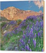 Usa, California, Independence Wood Print