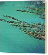 Usa, California, Seaweed Floating Wood Print