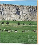 Utah Farm Cows Wood Print