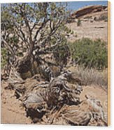 Utah Tree Wood Print