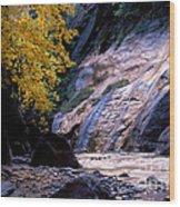 Utah - Zion National Park Virgin River 8 Wood Print
