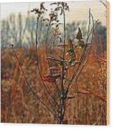 Autumn Grass6277 Wood Print