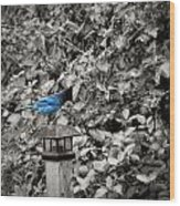 Vagabon Blue Bird Wood Print
