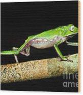 Vaillantis Monkey Frog Wood Print