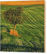 Val D'orcia Tree Wood Print