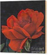 Valentine Rose Wood Print by Robert Bales