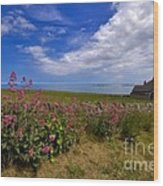 Valerian By A Stone Wall On The Northumberland Coast Wood Print