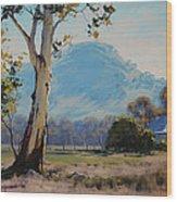 Valley Gum Tree Wood Print