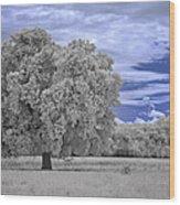 Valley Oak #2 Wood Print