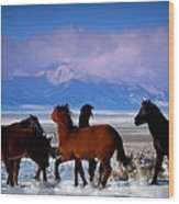 Valley Of The Wild Horses  Wood Print by Jeanne  Bencich-Nations