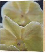 Vanilla Orchid Wood Print