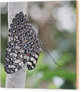 Variable Cracker Butterfly Wood Print