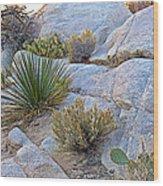 Varied Desert Flora Along Barker Dam Trail In Joshua Tree Np-ca Wood Print