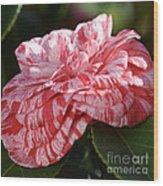 Variegated Camellia Wood Print