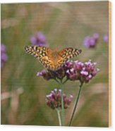 Variegated Fritillary Butterfly In Field Wood Print