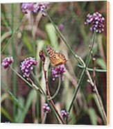 Variegated Fritillary Butterfly Wood Print