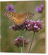 Variegated Fritillary Butterfly Square Wood Print