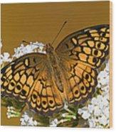 Variegated Fritillary Wood Print