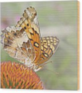 Variegated Fritillary On Cone Flower Wood Print
