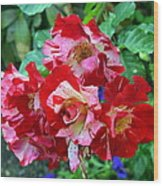 Variegated Multicolored English Roses Wood Print