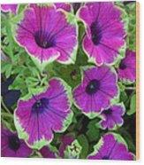 Variegated Petunias Wood Print