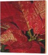 Variegated Poinsettia II Wood Print