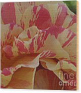 Variegated Rose Wood Print
