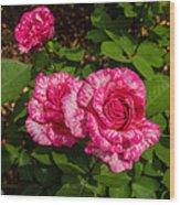 Variegated Roses Wood Print