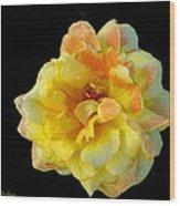 Variegated Yellow Rose Wood Print