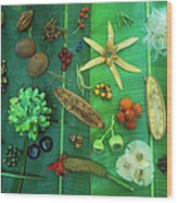Variety Of Seeds And Fruits Wood Print