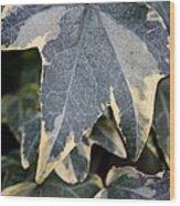 Varigated Ivy Leaves Wood Print