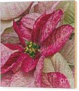 Varigated Poinsettia Wood Print